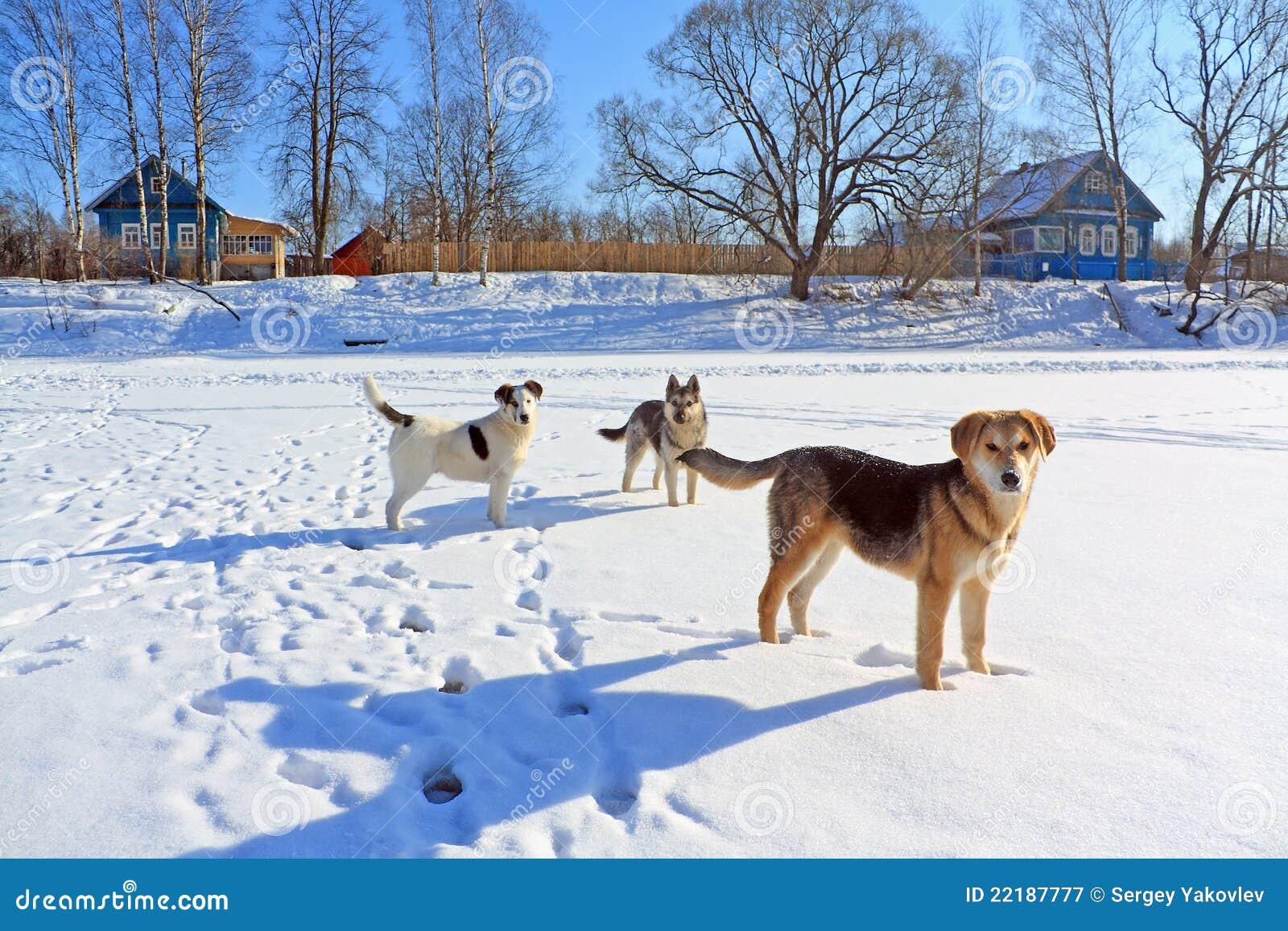 τα σκυλιά απομακρύνοντα&iota