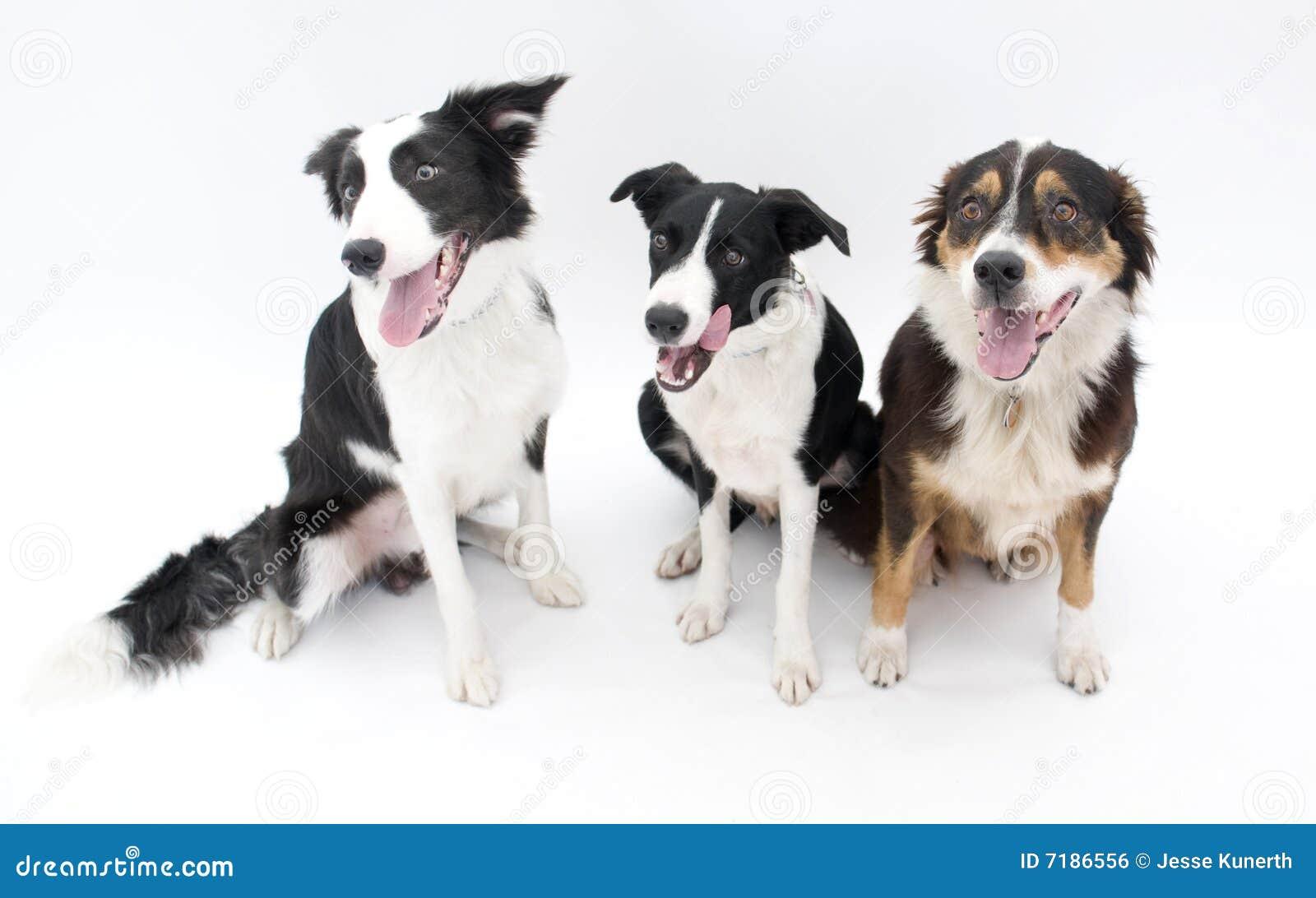 τα σκυλιά απομόνωσαν τρία
