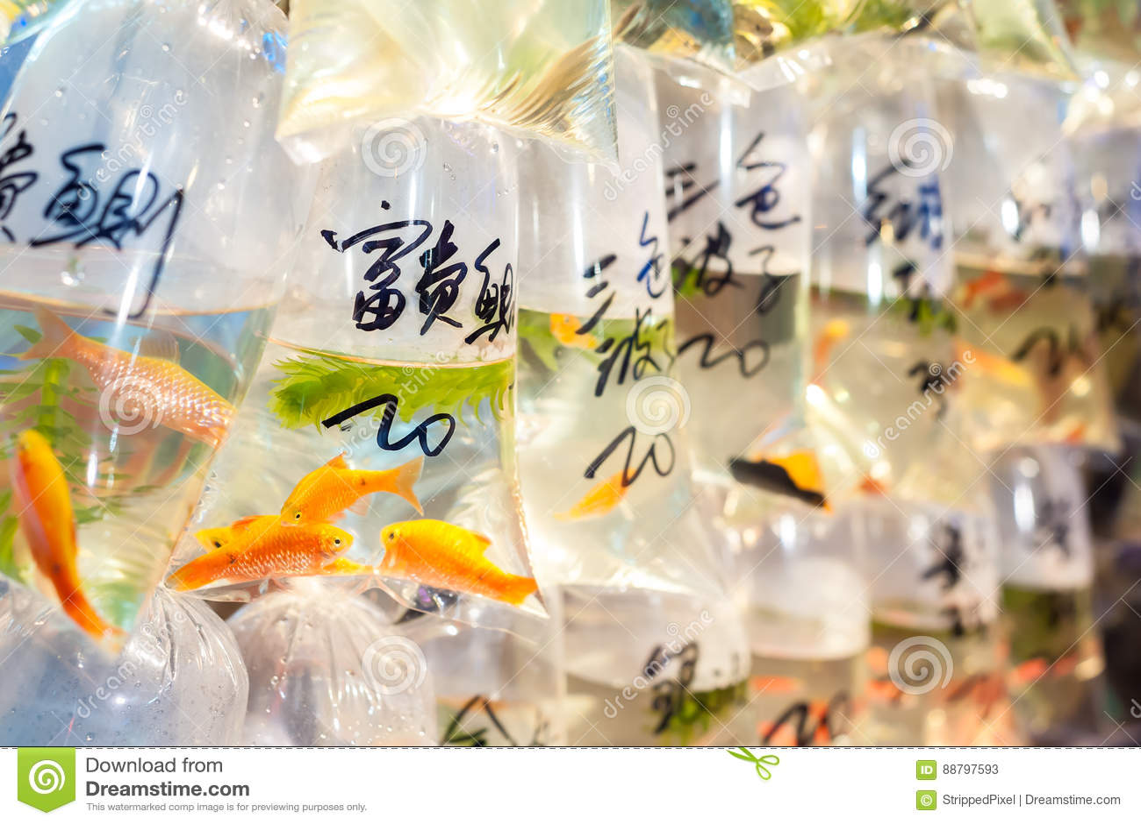 Τα τροπικά ψάρια για την πώληση στην οδό Χονγκ Κονγκ ` s Tung Choi goldfish εμπορεύονται, Mong Kok, Χονγκ Κονγκ