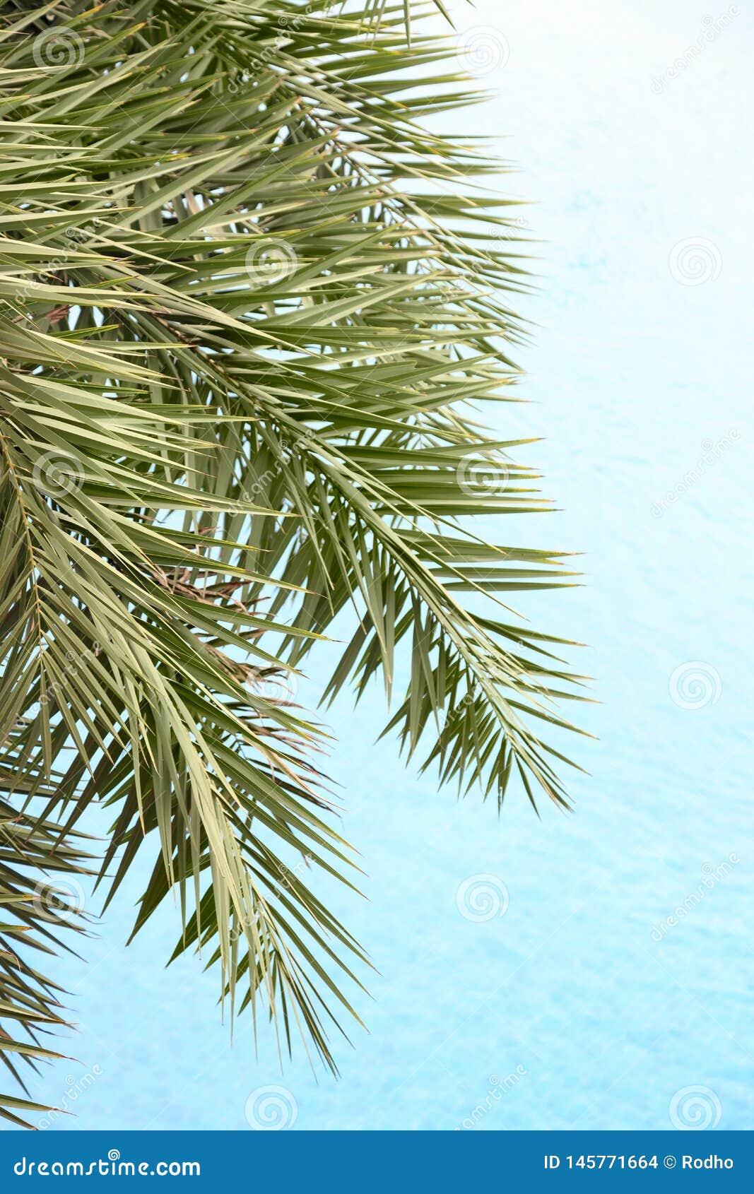 Τα φρέσκα φύλλα φοινικών στο όμορφο υπόβαθρο καθαρού νερού