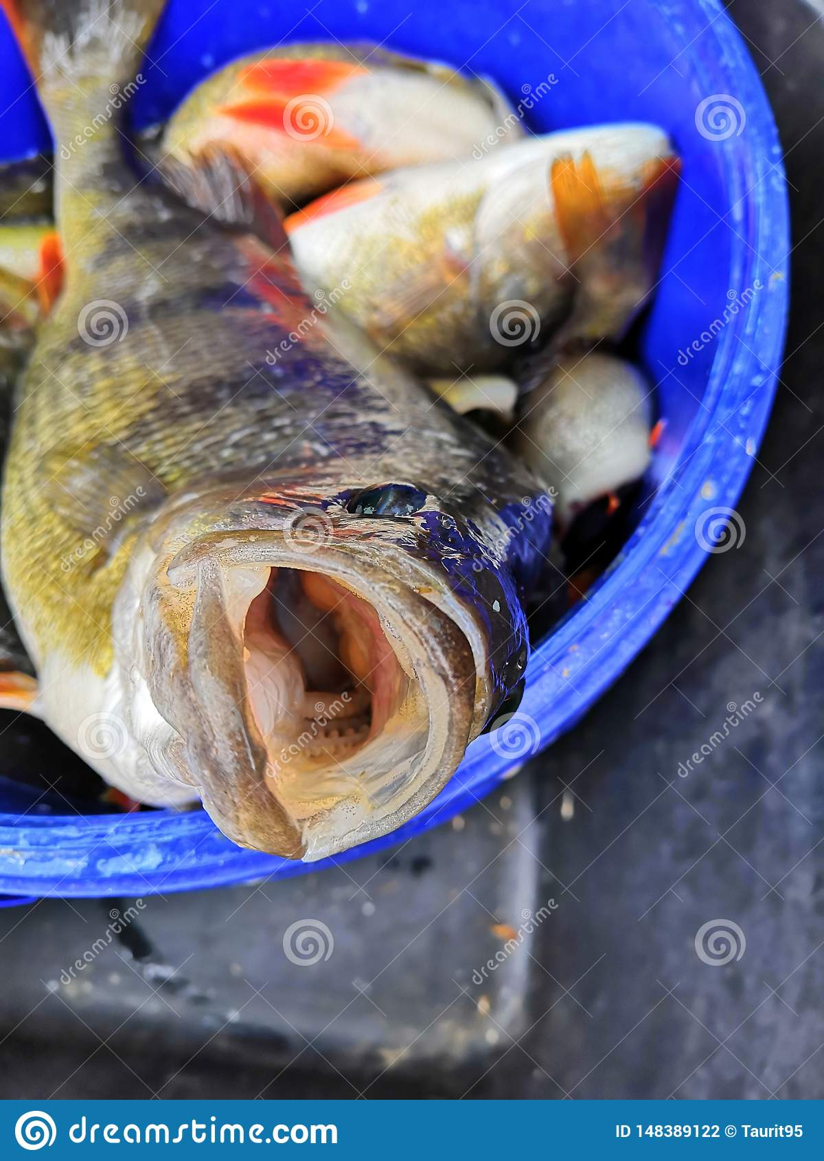 Τα φρέσκα ψάρια από τη θάλασσα Läänemeri