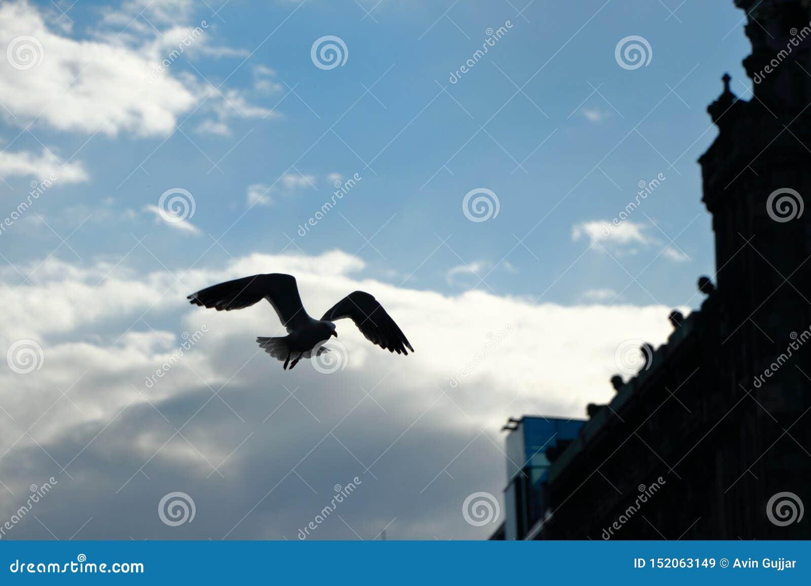 Τα φτερά είναι ευρέως ανοικτά
