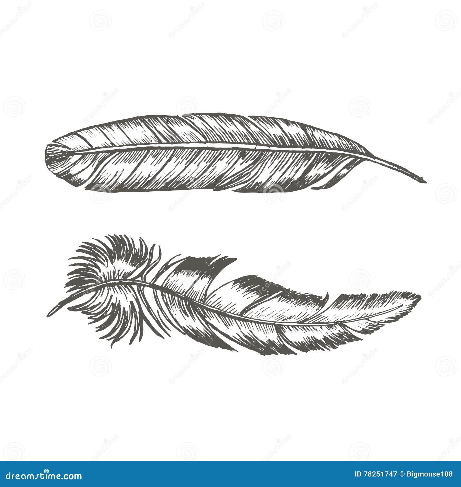 Τα φτερά καθορισμένα το χέρι σύρουν το σκίτσο Καθιερώνον τη μόδα πρότυπο δερματοστιξιών διάνυσμα