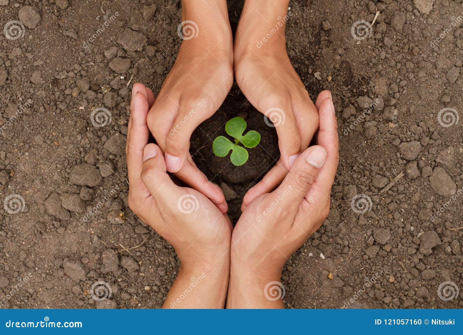 Τα χέρια είναι προστατεύουν ένα μικρό δέντρο ή το φυτό αυξάνεται στο χώμα