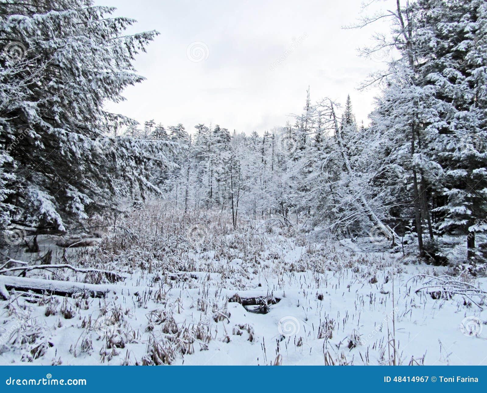 Τα χιονώδη ξύλα σε παλαιό σφυρηλατούν