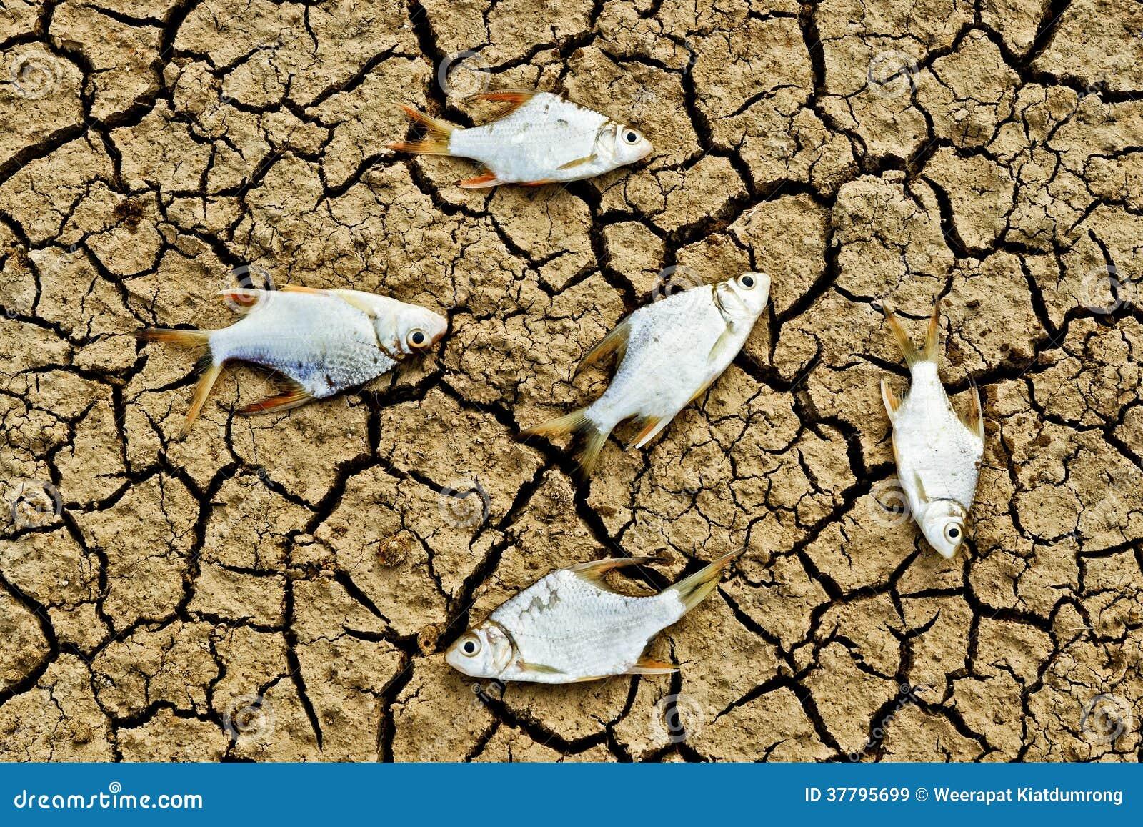 Τα ψάρια πέθαναν στη ραγισμένη γη