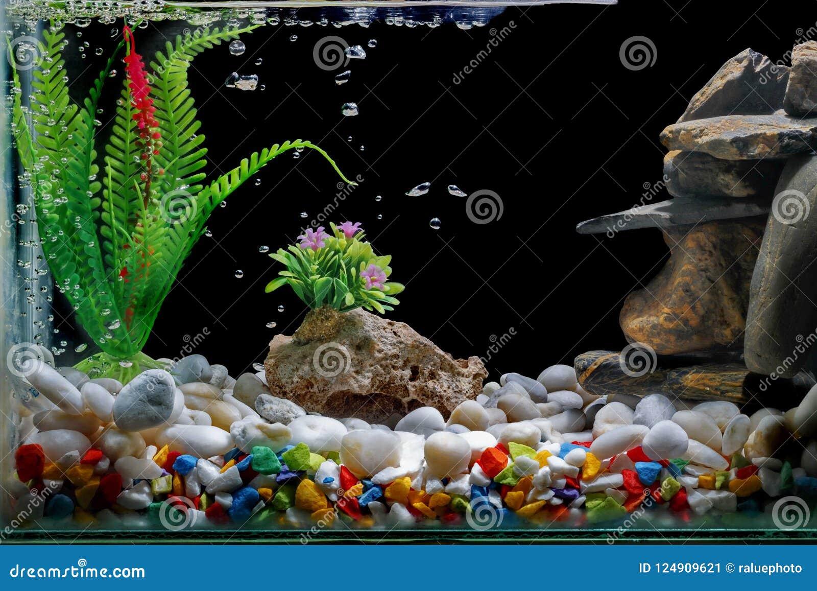 Τα ψάρια τοποθετούν σε δεξαμενή το ντεκόρ, με το αμμοχάλικο και το δέντρο, με τις φυσαλίδες στο μαύρο σκηνικό