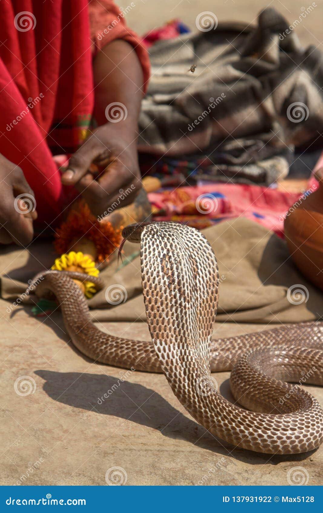Τελευταίος γόης φιδιών (Bede) από Benares