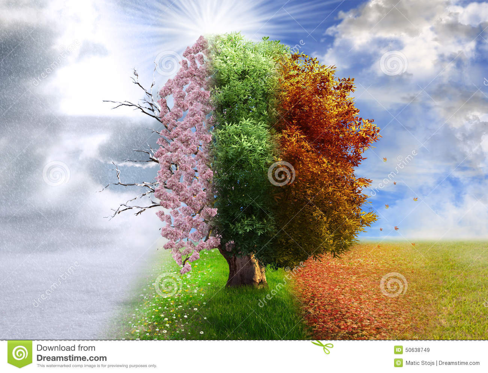 Τεσσάρων εποχών δέντρο, χειρισμός φωτογραφιών