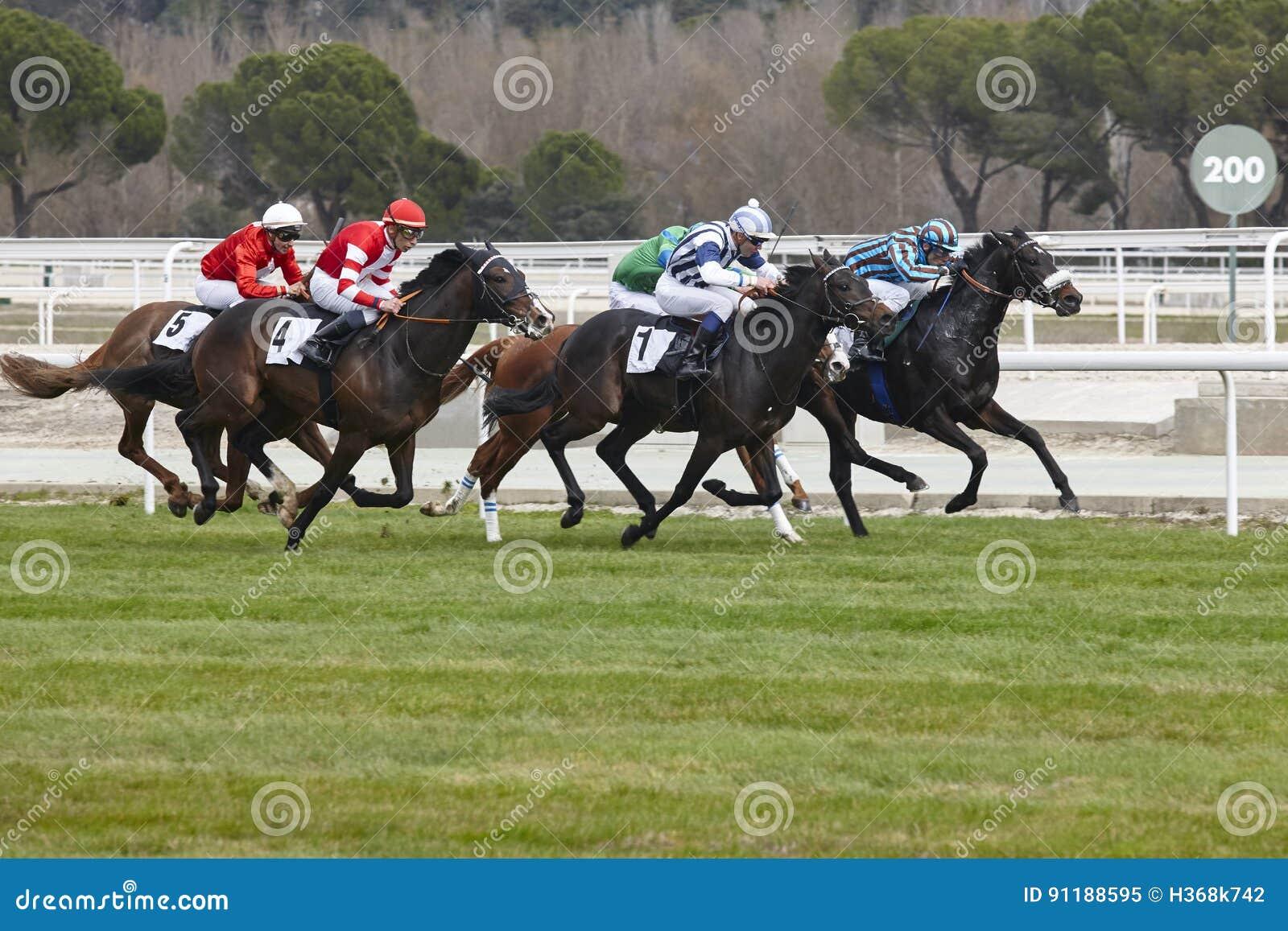 Τελική βιασύνη αγώνων αλόγων Αθλητισμός ανταγωνισμού ιππόδρομος Νικητής SP