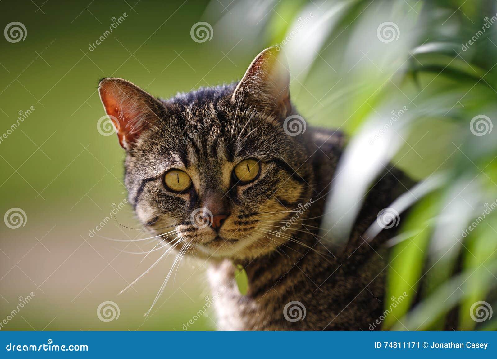 Τιγρέ γάτα με τα φύλλα κρίνων
