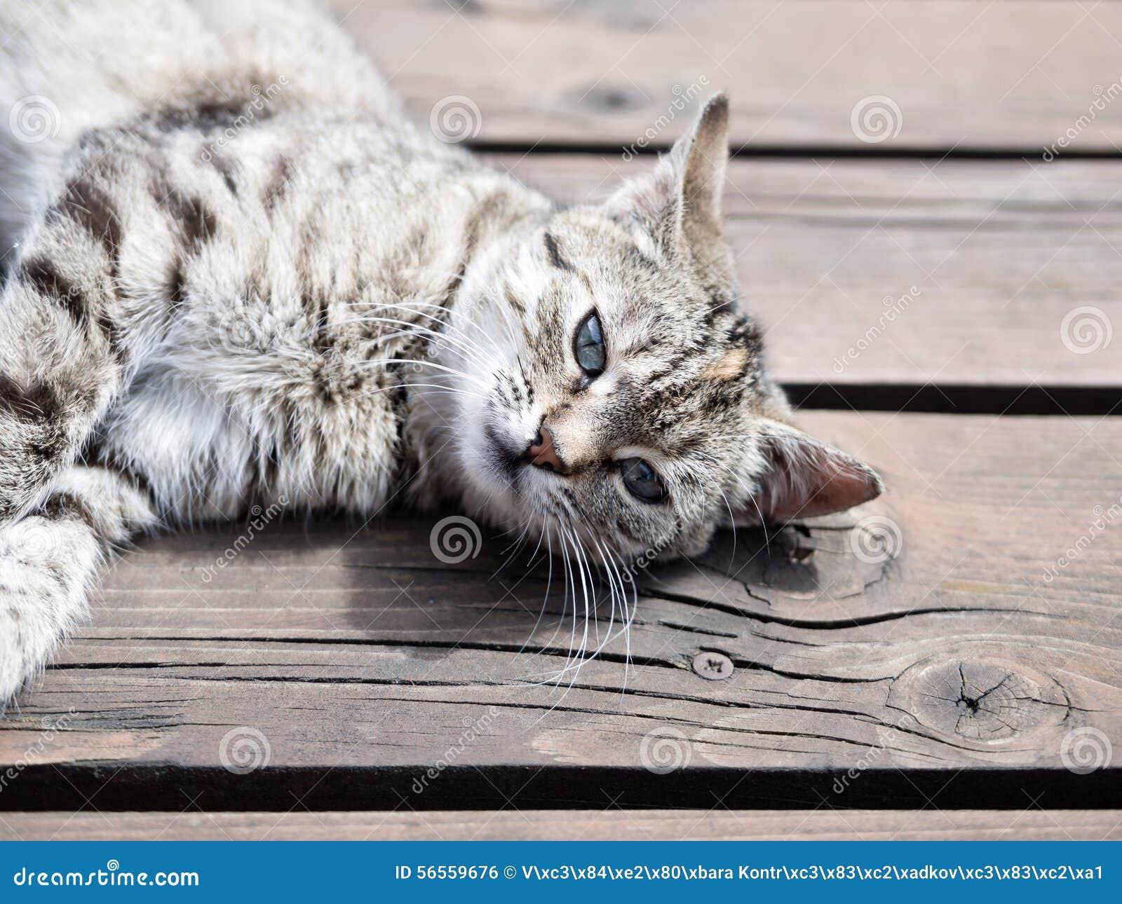 Download Τιγρέ γάτα που βρίσκεται ξύλινα, μαλακά χρώματα Στοκ Εικόνες - εικόνα από τιγρέ, υπαίθρια: 56559676