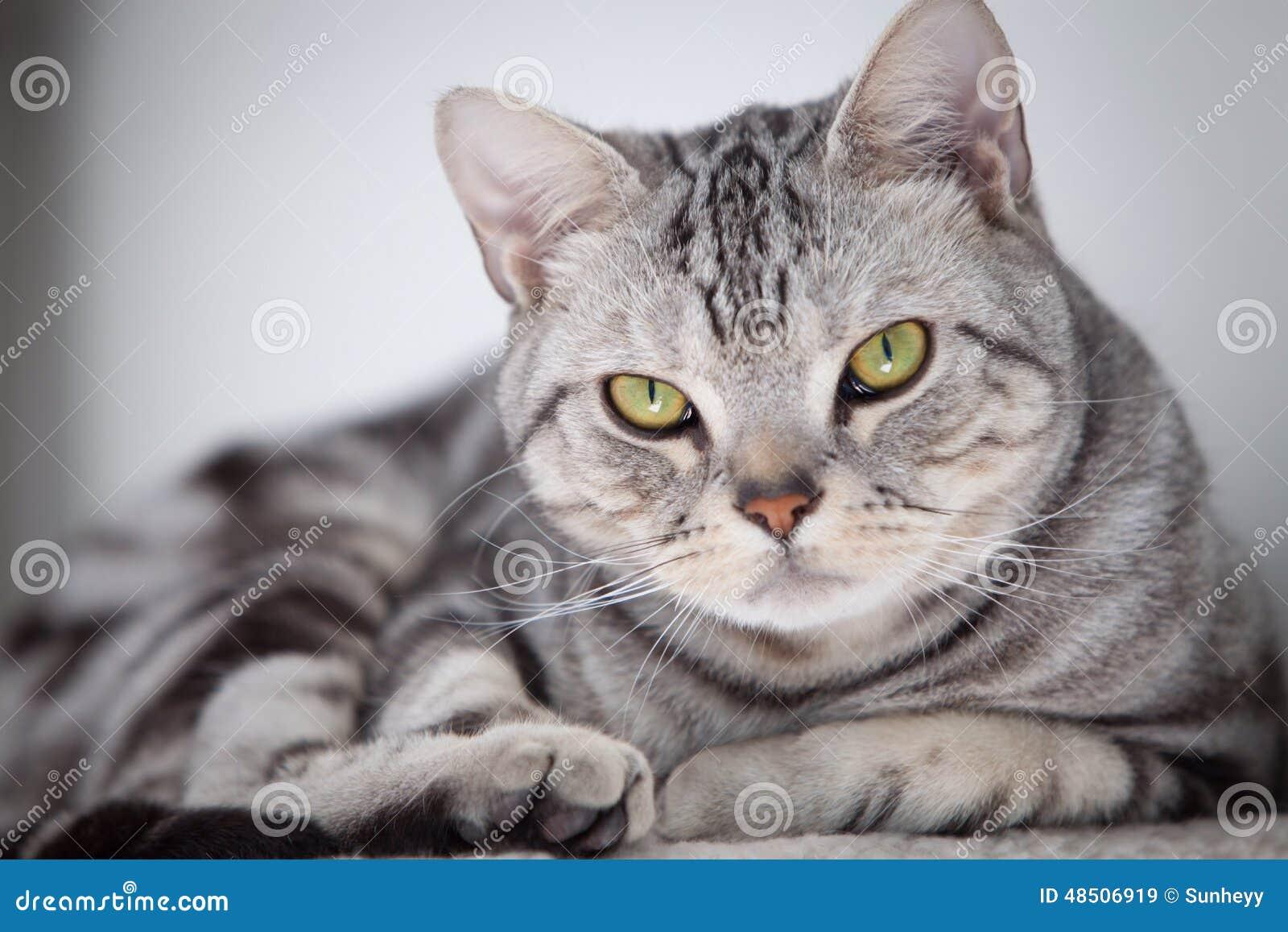 Τιγρέ γάτα που εξετάζει τη φωτογραφική μηχανή