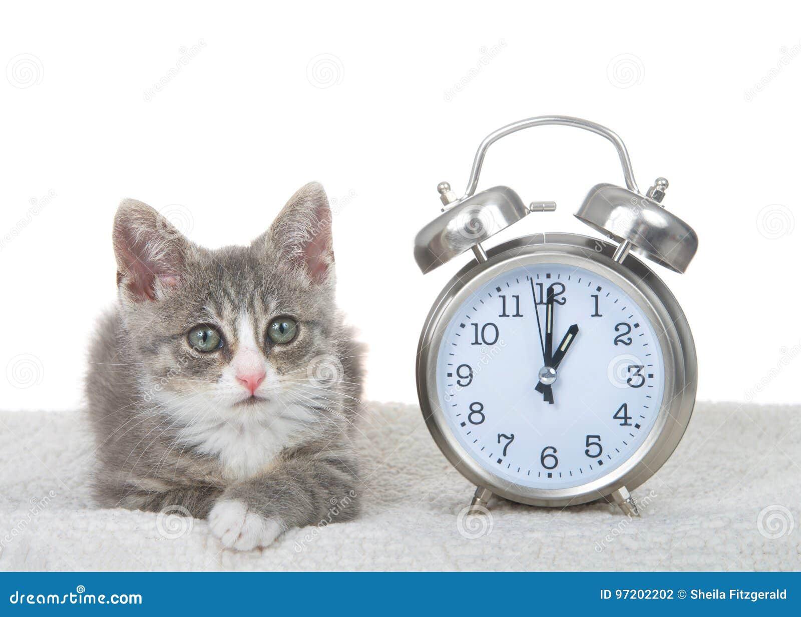 Τιγρέ γατάκι δίπλα στο ρολόι sheepskin στο κρεβάτι, έννοια αποταμίευσης φωτός της ημέρας
