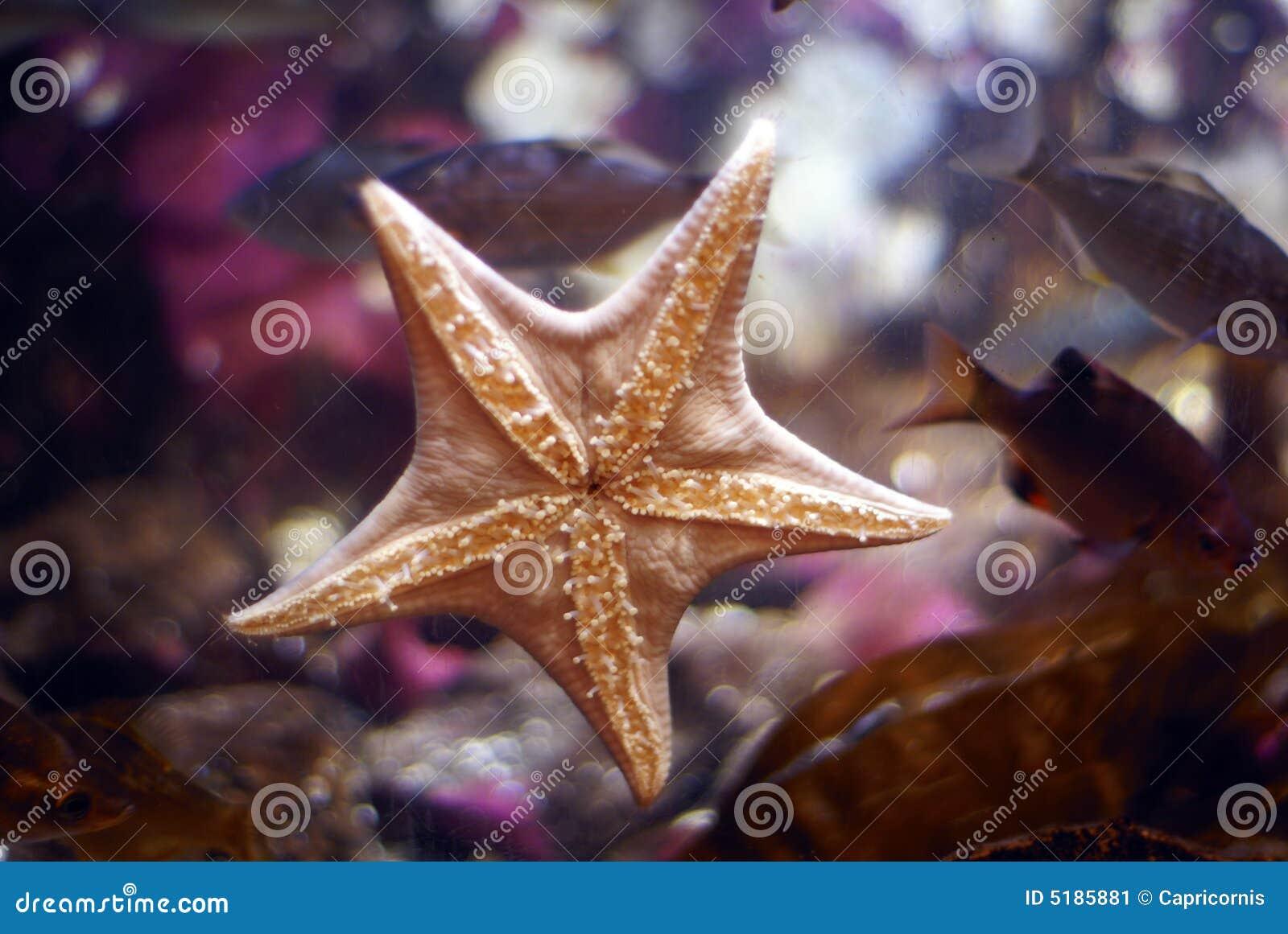 τοίχος αστεριών θάλασσας ενυδρείων
