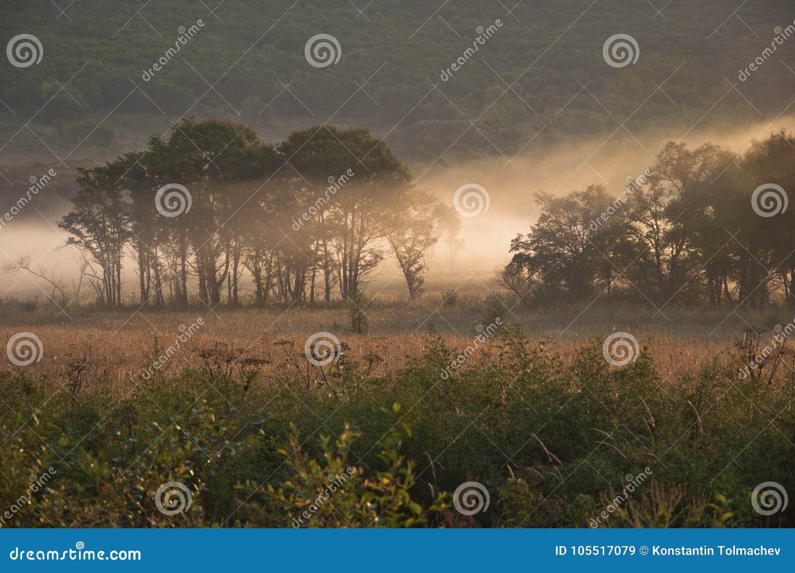 Τομέας και δάσος στην ομίχλη/το πρωί/τη φύση της μακριά ανατολικά Ρωσίας