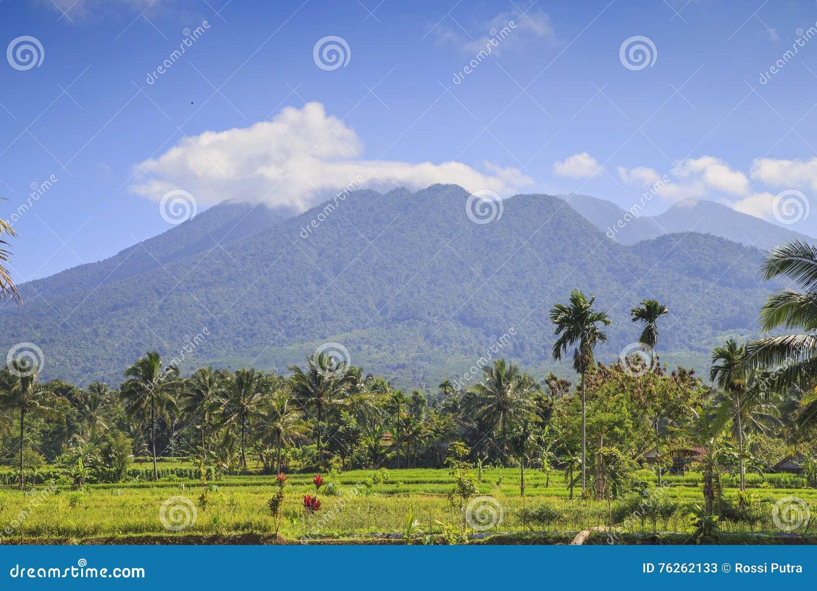 Τομέας ρυζιού στην Ινδονησία