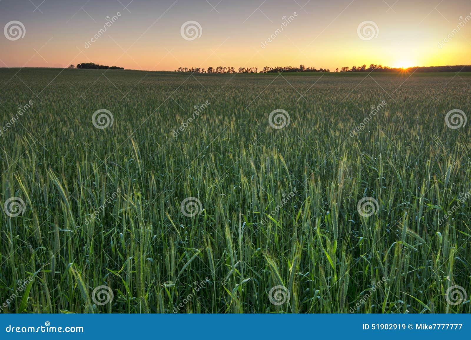 Τομέας σίτου στο ηλιοβασίλεμα, Midwest, ΗΠΑ