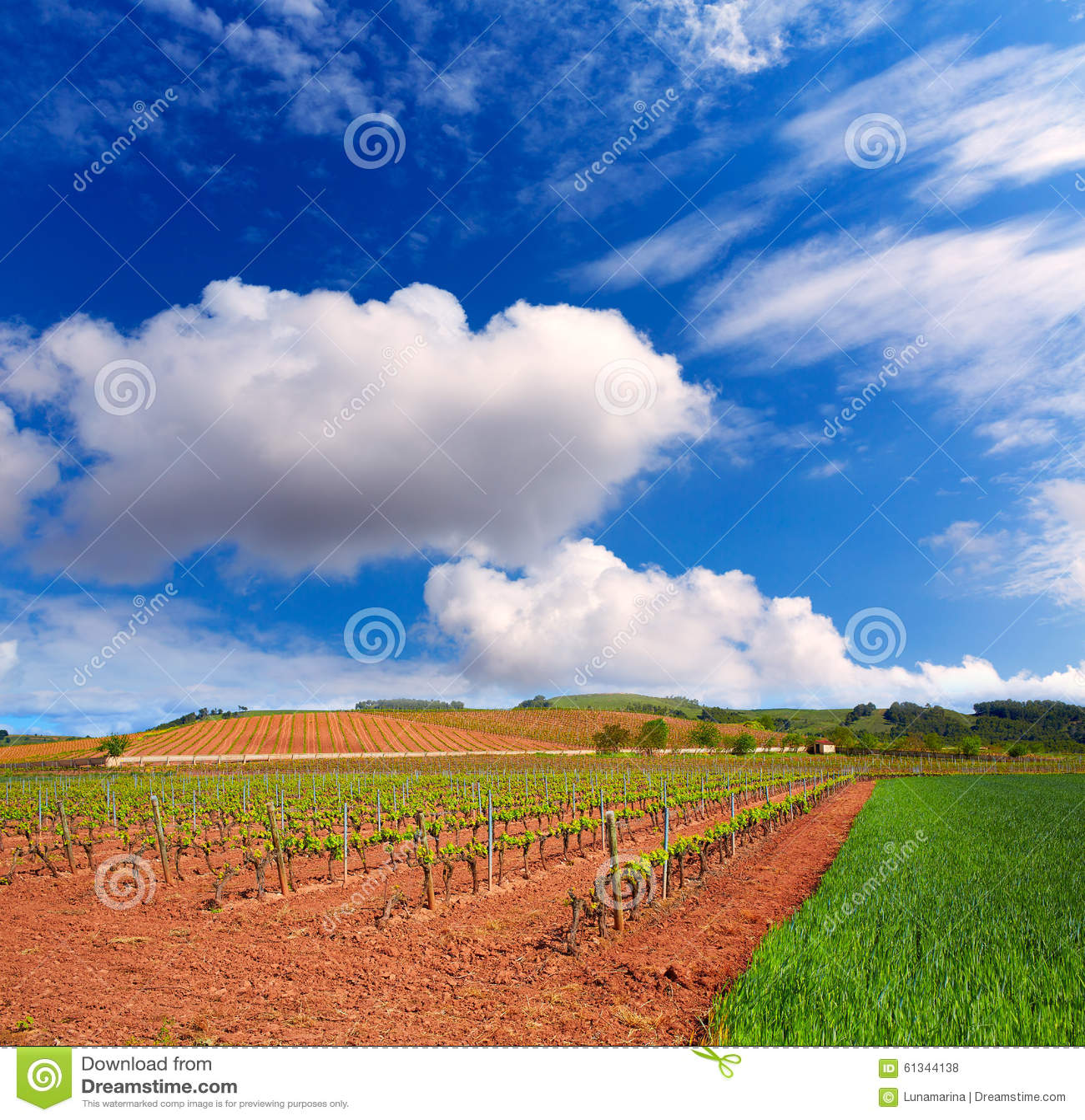 Τομείς αμπελώνων Λα Rioja με τον τρόπο Αγίου James