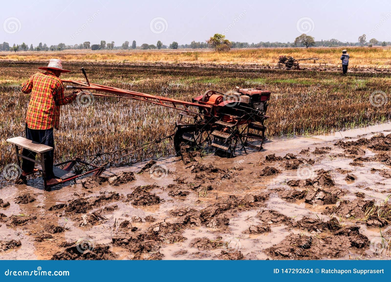 Τομείς ρυζιού που έχουν συγκομιστεί και προετοιμάζονται για την επόμενη φύτευση ρυζιού