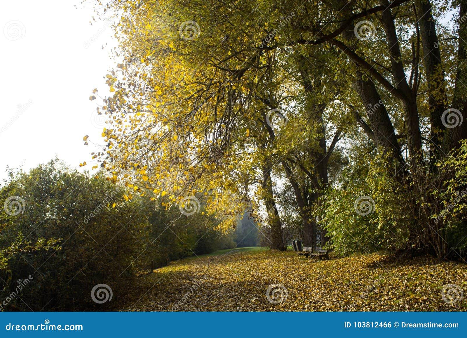 Τοπίο Βέλγιο φθινοπώρου