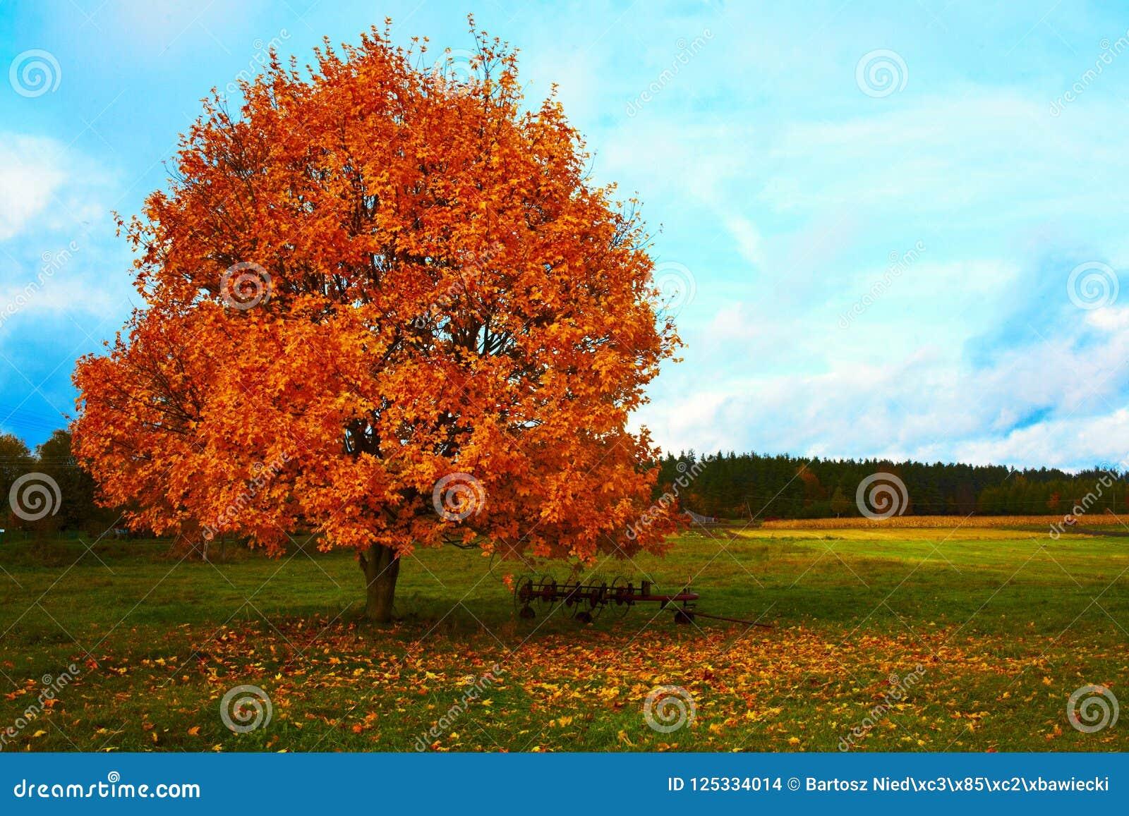 Τοπίο δέντρων φθινοπώρου