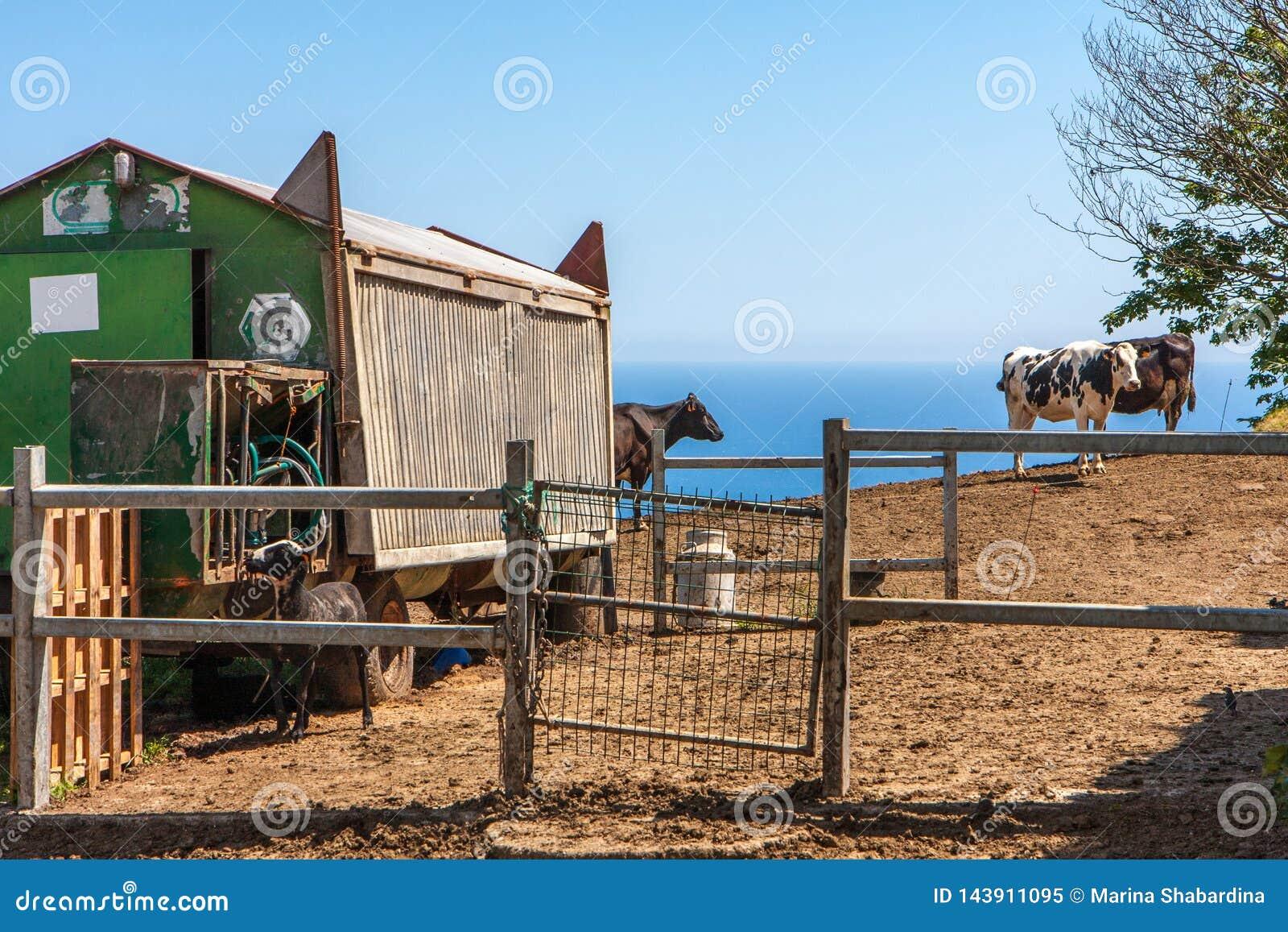 Τοπίο με τις απόψεις του αγροκτήματος, της καλύβας από το αυτοκίνητο σιδηροδρόμων και των βοοειδών