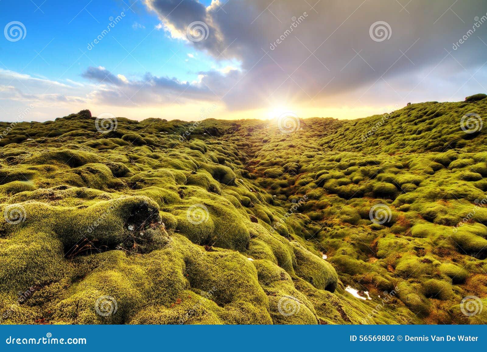 Download Τοπίο πρωινού Eldhraun στοκ εικόνες. εικόνα από αλλοδαπός - 56569802