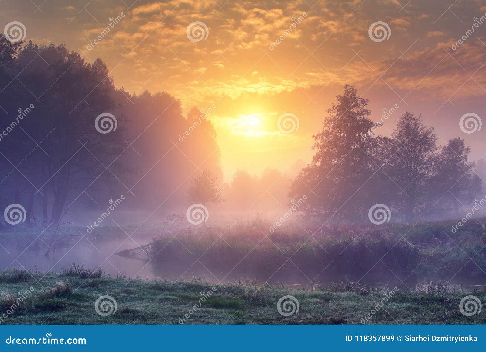 Τοπίο της καταπληκτικής θερινής φύσης το πρόωρο ομιχλώδες πρωί στην ανατολή Δέντρα στην όχθη ποταμού στην υδρονέφωση στο θερμό υπ