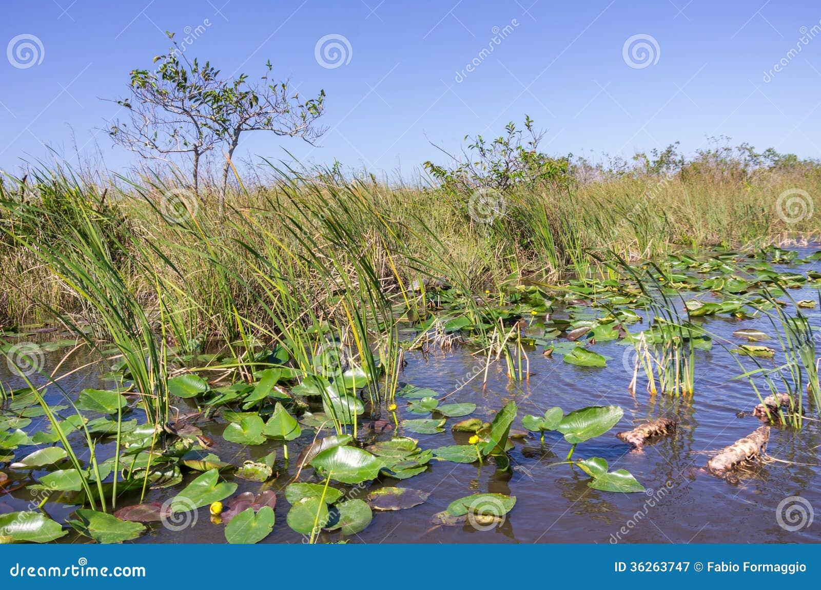 Τοπίο της Φλώριδας Everglades
