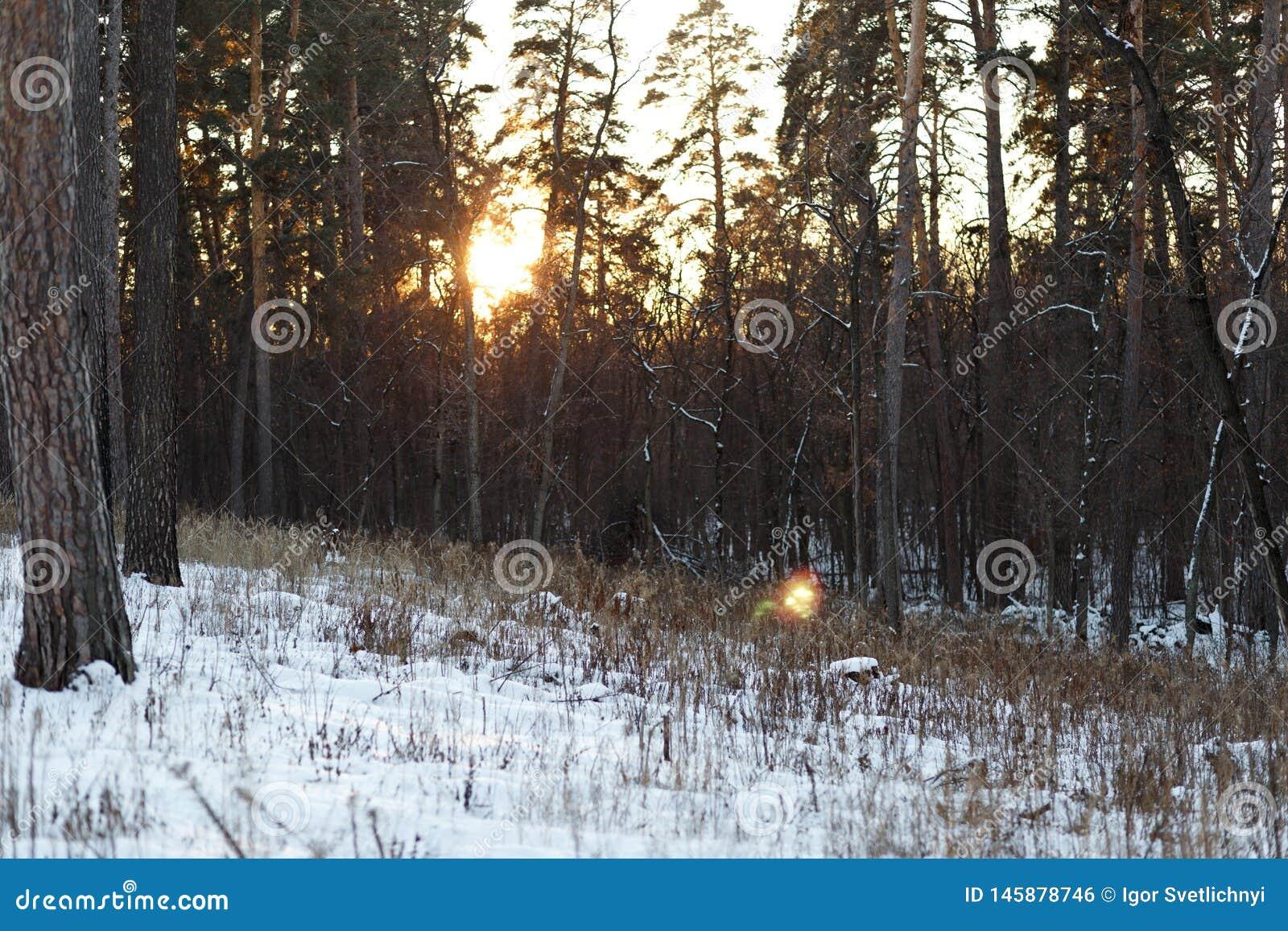 Τοπίο του χειμερινού δάσους