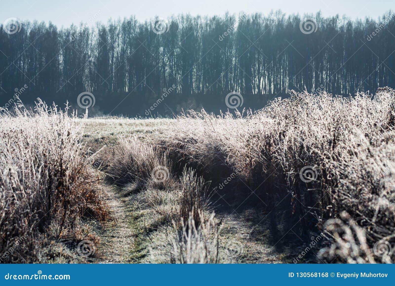Τοπίο φθινοπώρου με τον παγετό