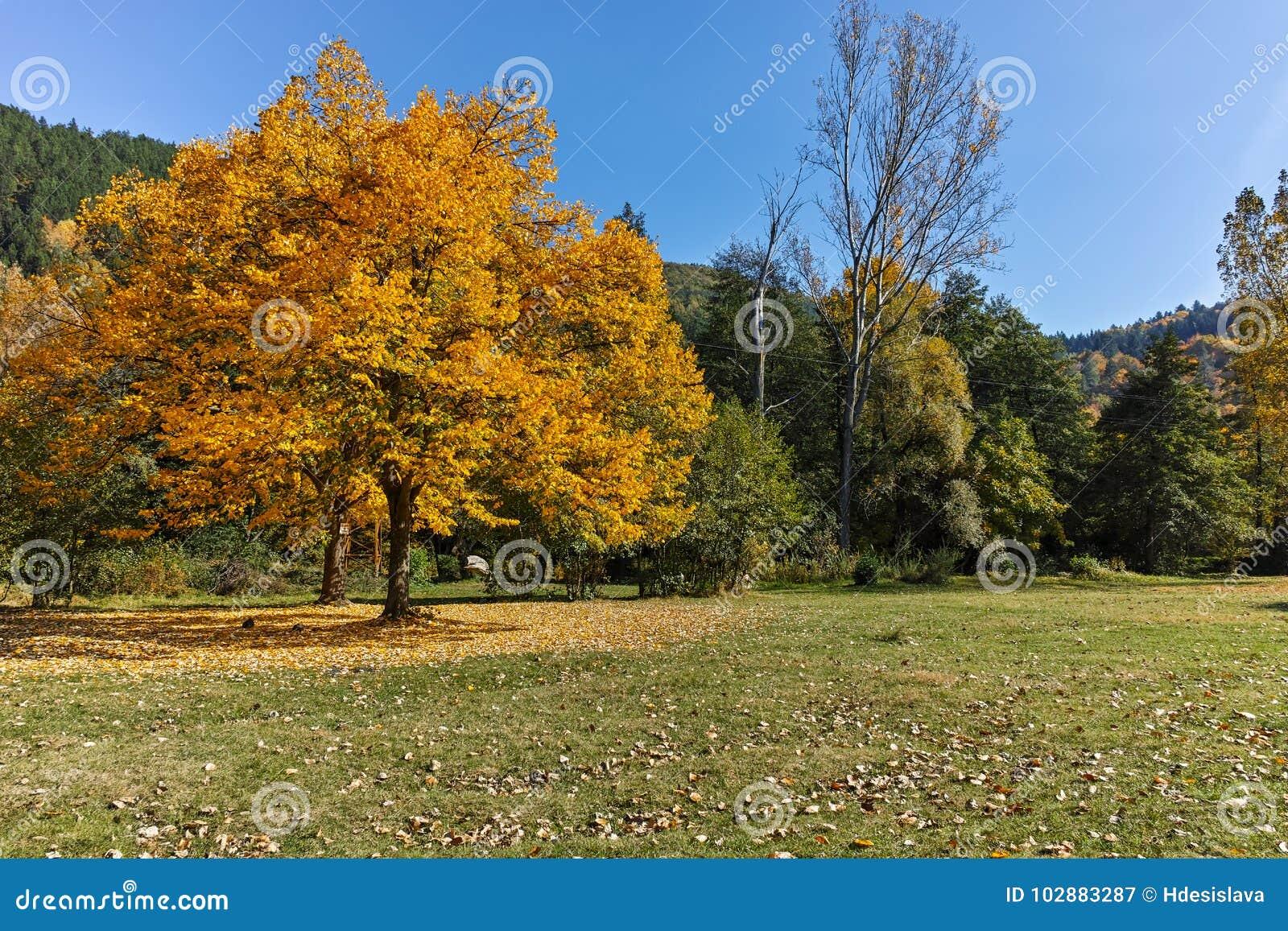 Τοπίο φθινοπώρου με το κίτρινο δέντρο κοντά στη λίμνη Pancharevo, περιοχή πόλεων της Sofia