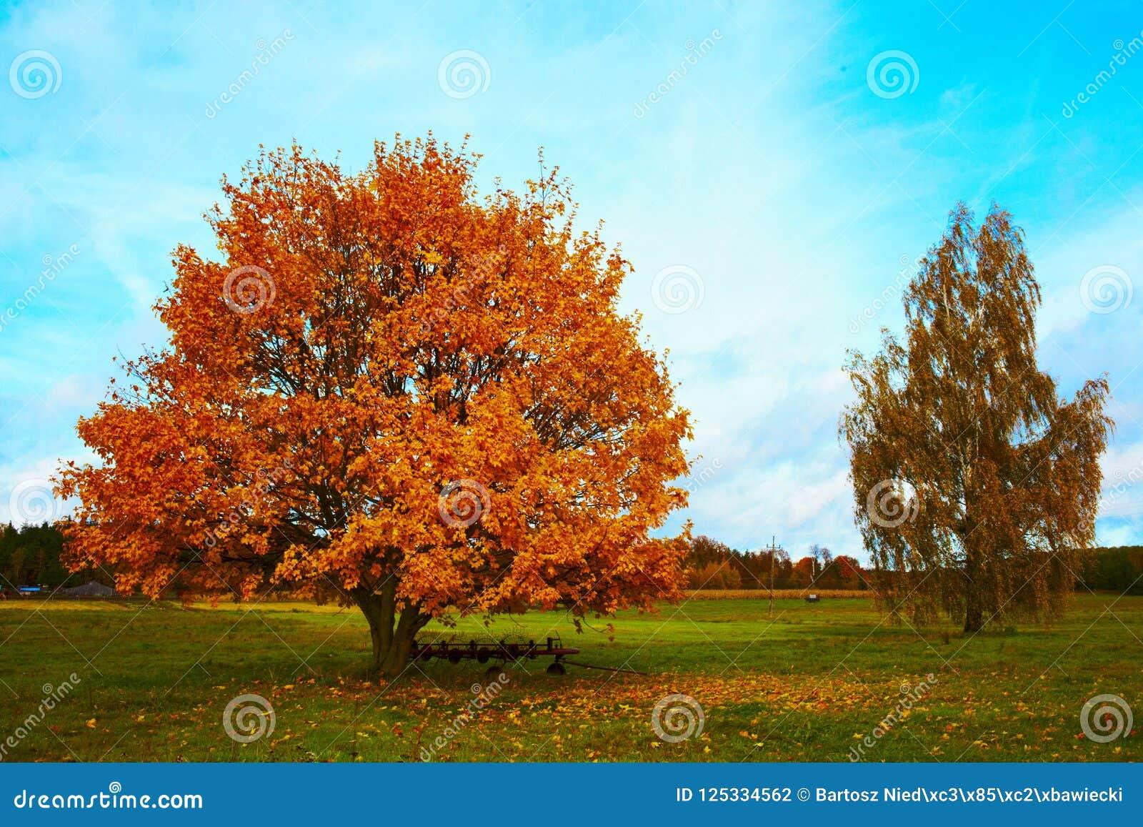 Τοπίο φθινοπώρου