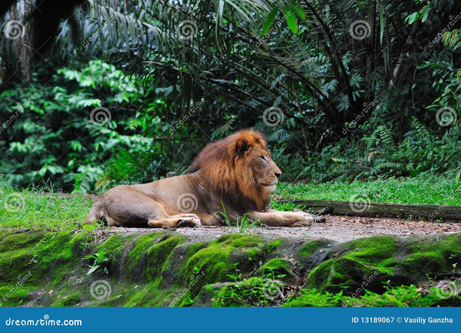 τοποθέτηση του λιονταρ&iot