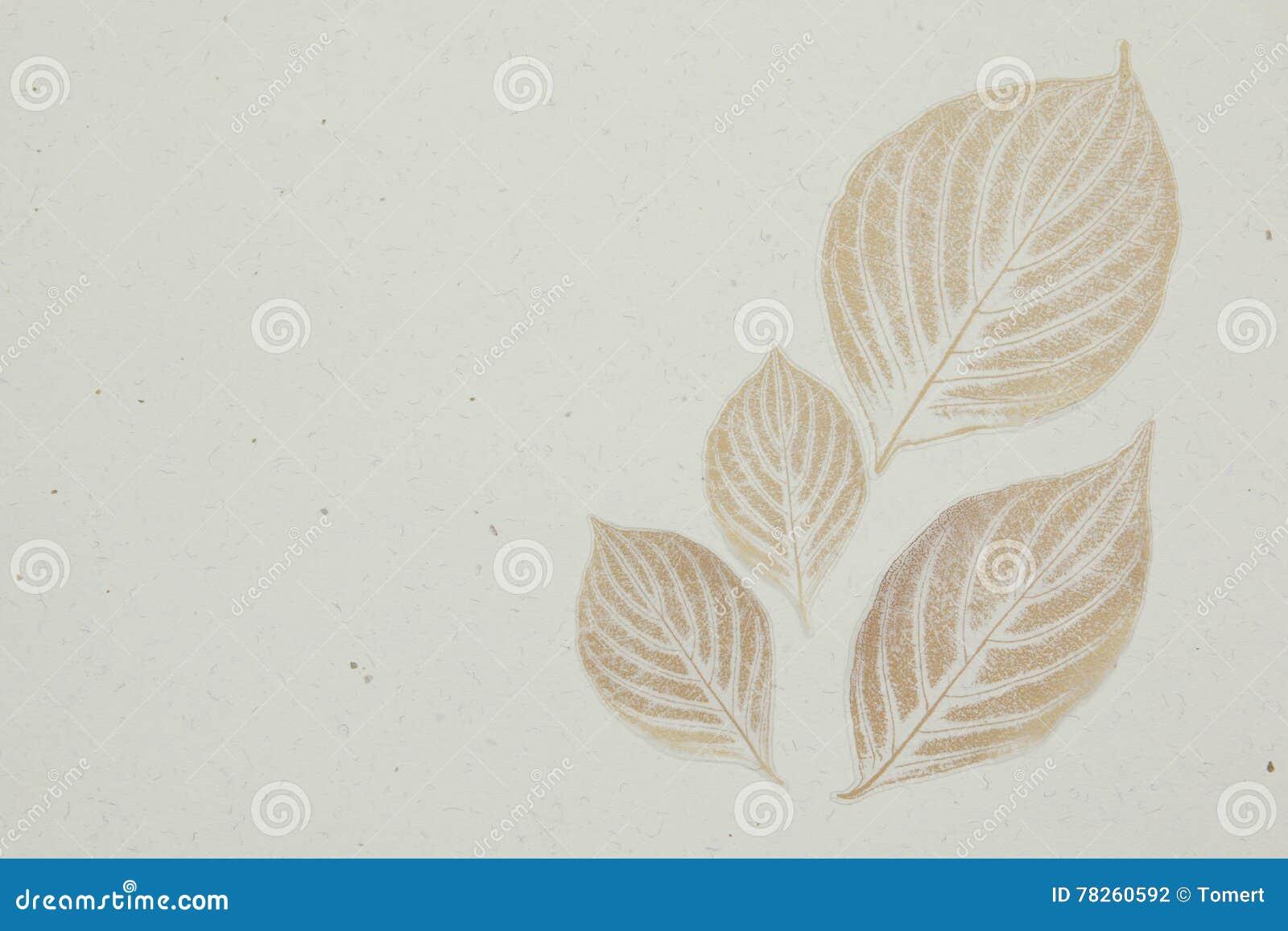 Τοπ άποψη των όμορφων φύλλων φθινοπώρου στο άσπρο υπόβαθρο