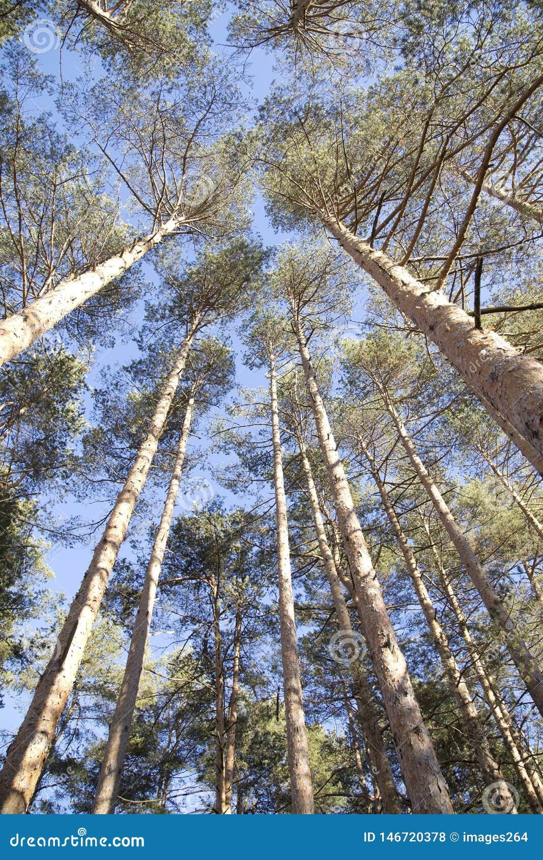 Τοπ δέντρα