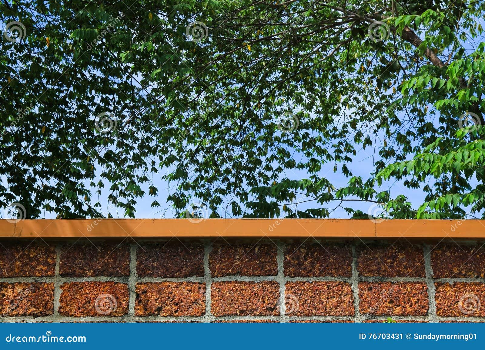 Τουβλότοιχος και πράσινοι φύλλο και μπλε ουρανός