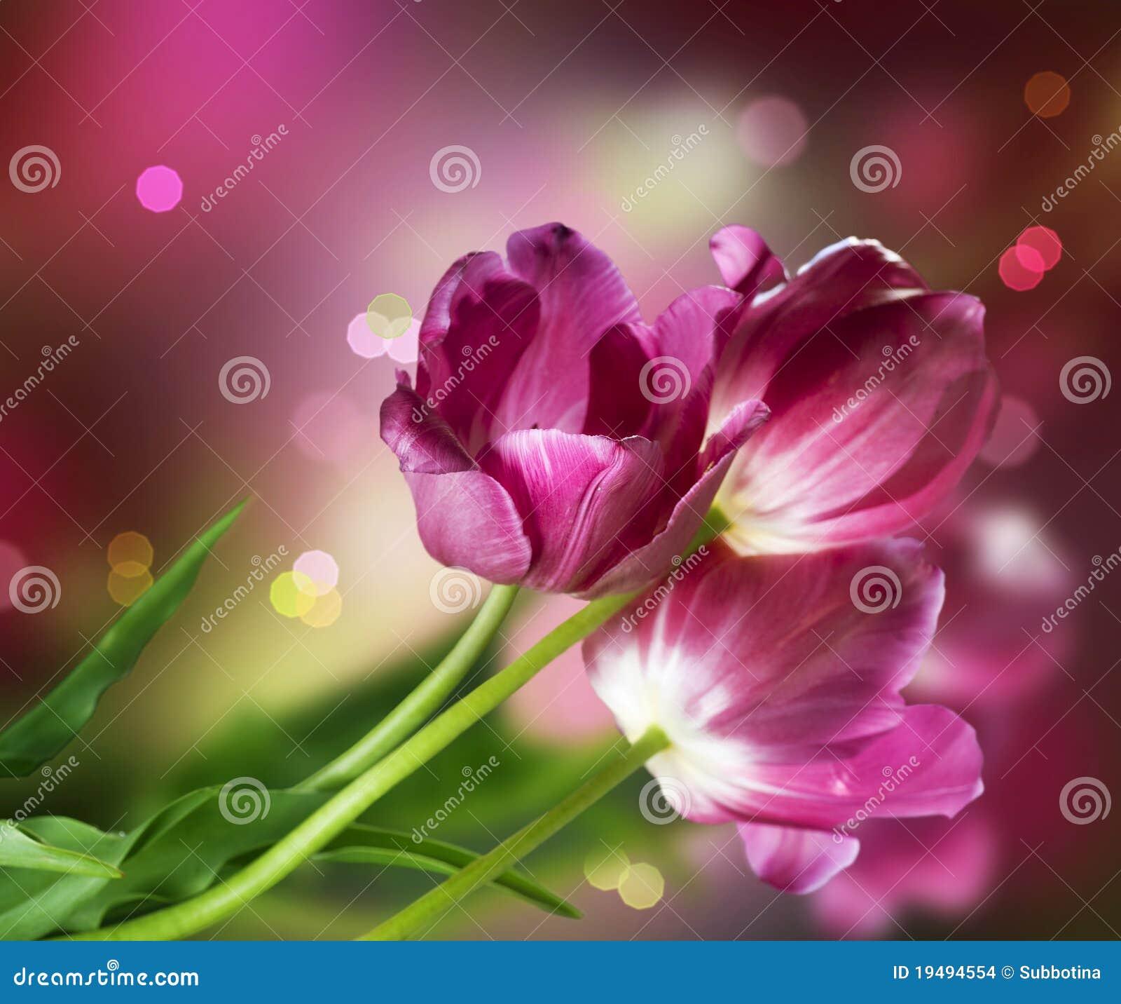 τουλίπες λουλουδιών &sigm