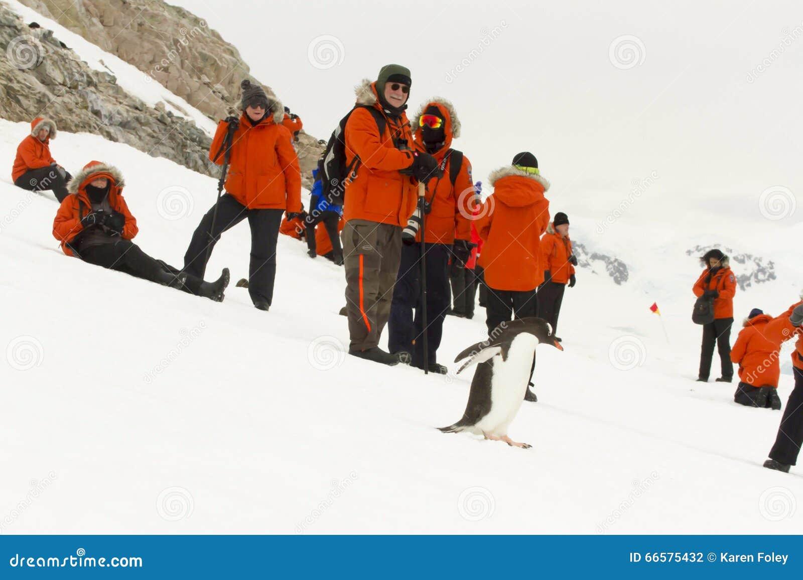 Τουρίστες και gentoo penguin