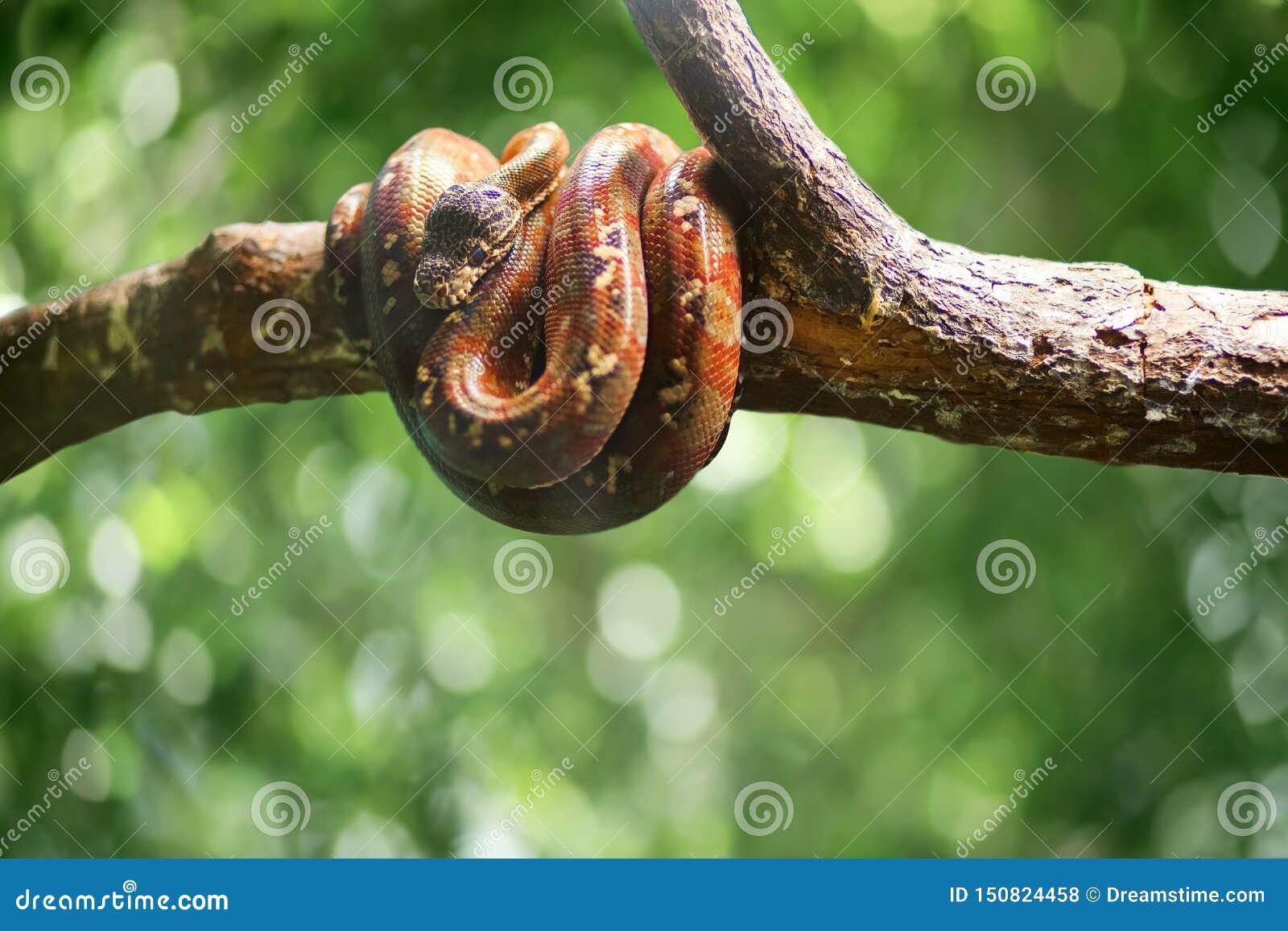 Το άγριο φίδι στο πράσινο bokeh φεύγει backround r