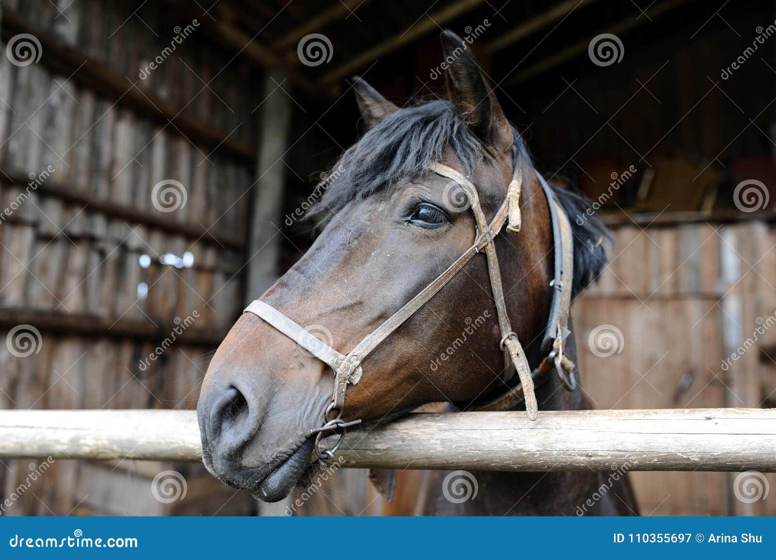 Το άλογο που ζει στο αγρόκτημα Τον Ιούλιο του 2015
