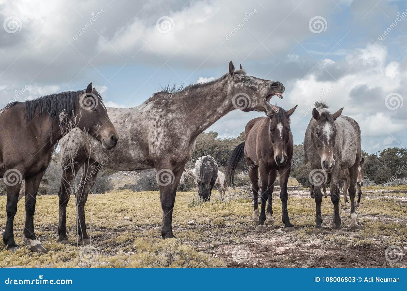 Το άλογο χλιμιντρίσματος