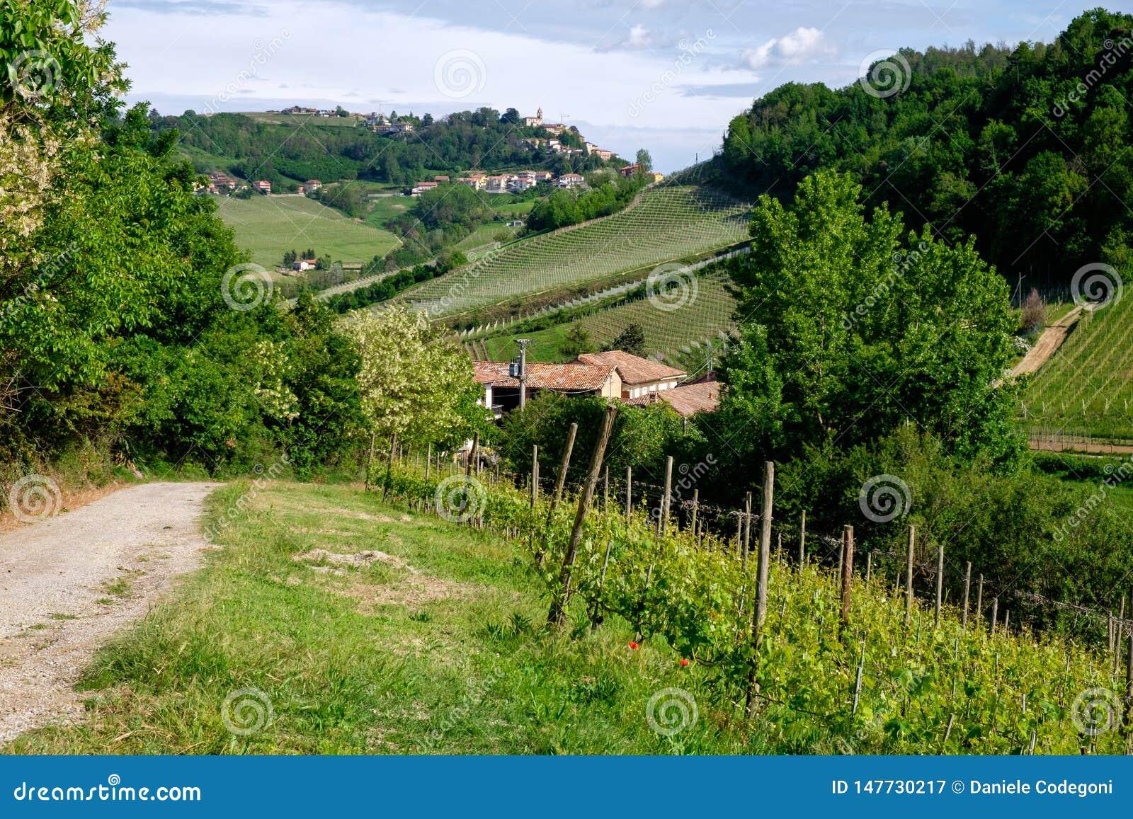 Το άτομο σε ένα άλογο οδηγά μεταξύ του αμπελώνα με το χωριό d'Alba Monforte Διάβαση από Barolo