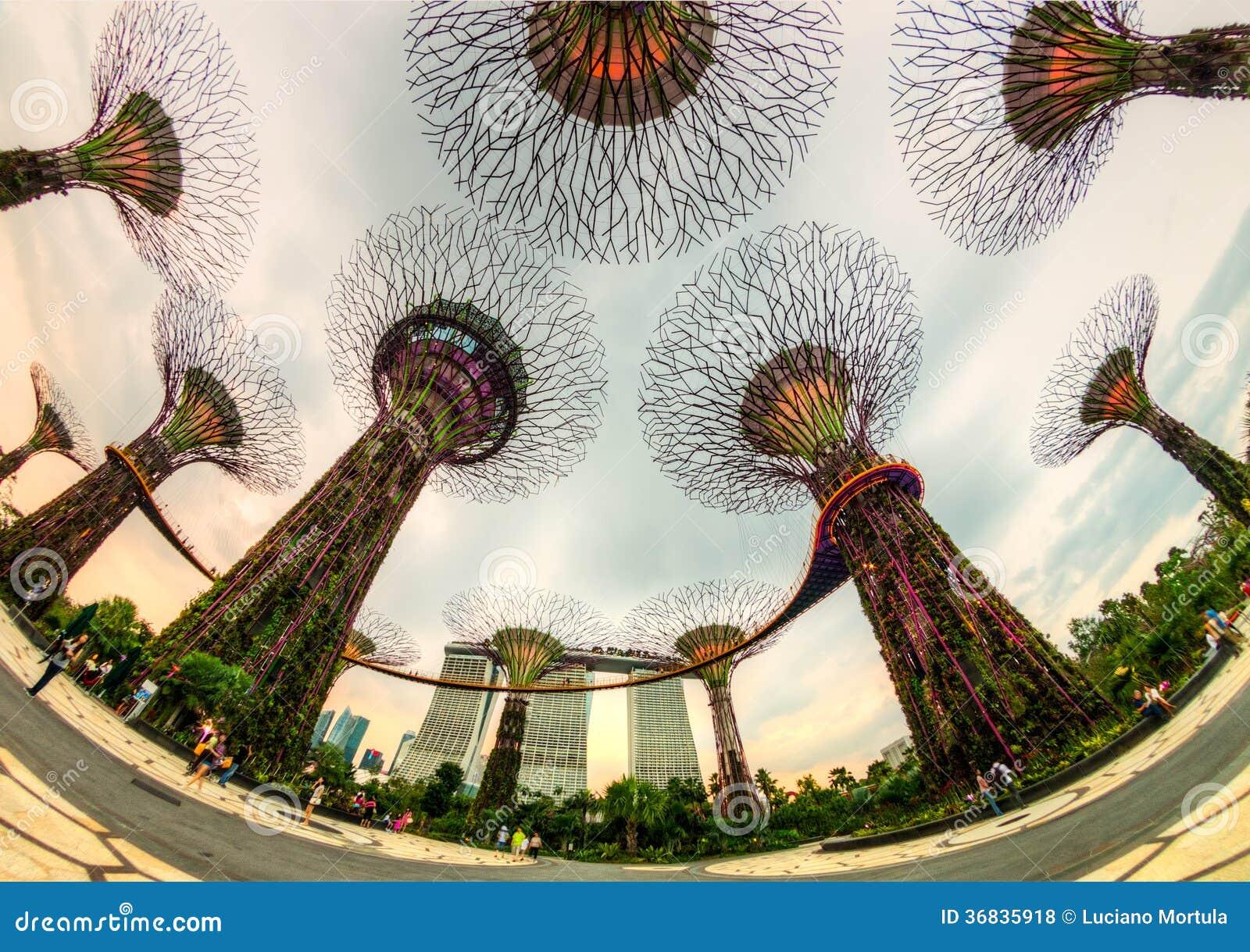 Το άλσος supertree στους κήπους από τον κόλπο, Σιγκαπούρη
