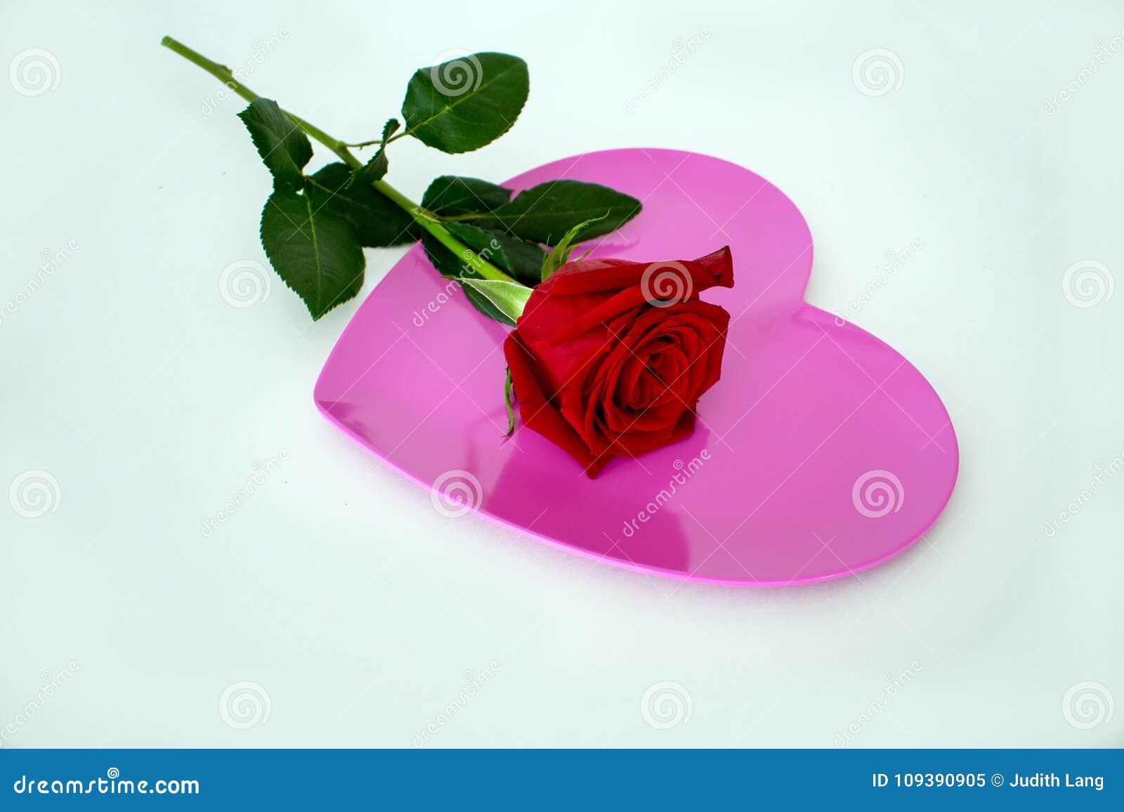 Το ένα κόκκινο αυξήθηκε τοποθετημένος πάνω από το ρόδινο διαμορφωμένο καρδιά πιάτο
