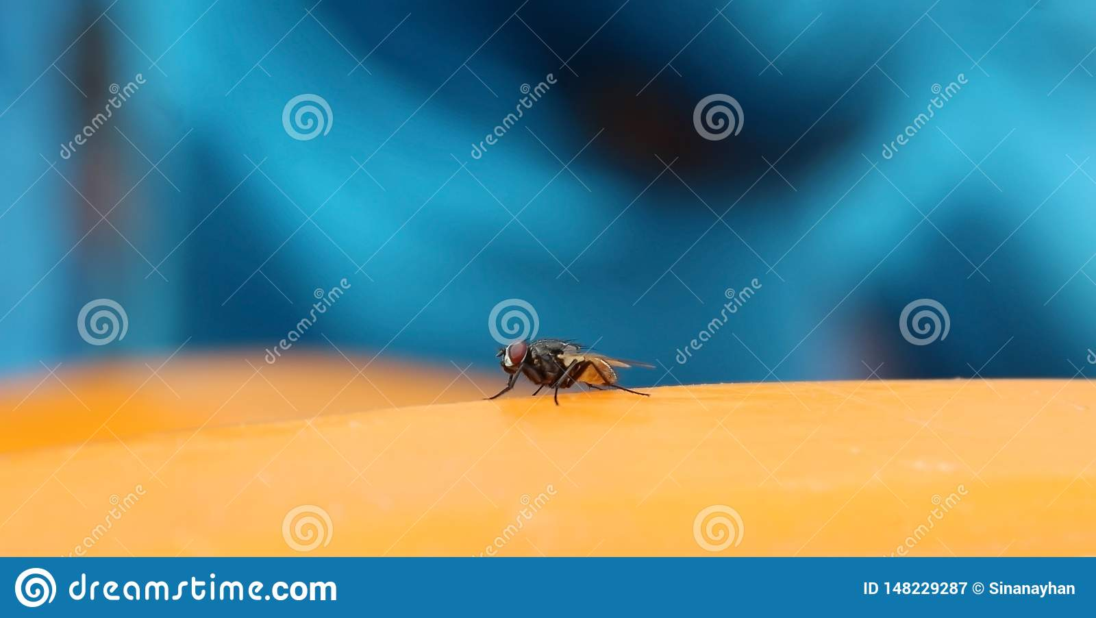 Το έντομο μυγών που στηρίζεται στην κίτρινη επιφάνεια