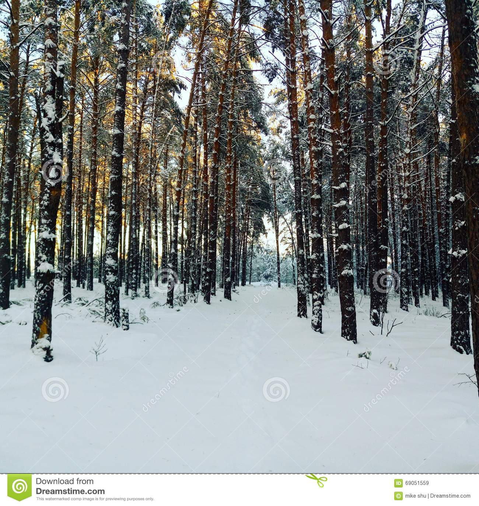 Το ίχνος στο δάσος