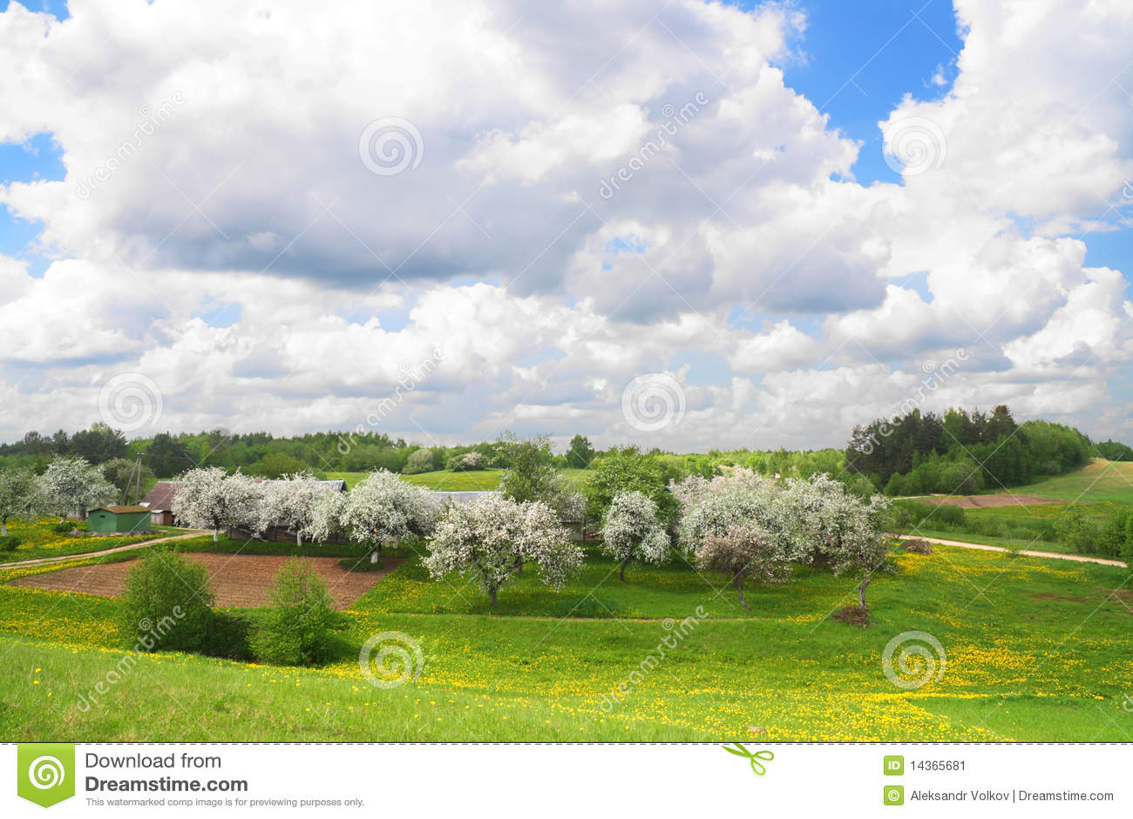 το ανθίζοντας τοπίο μήλων &m
