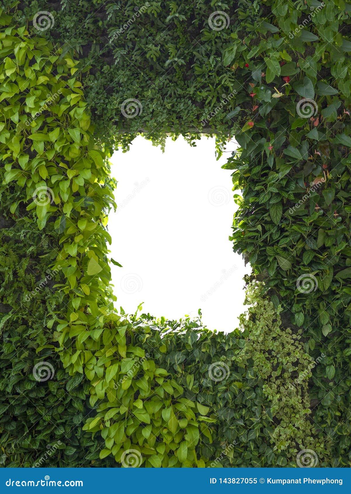 Το αφηρημένος πράσινος φύλλωμα ή ο τοίχος και το λευκό φύλλων απομόνωσαν το παράθυρο, διάστημα αντιγράφων